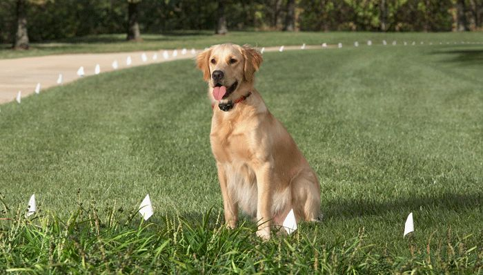 Ensuring Pets Safety With The New Electric Pet Fence